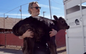 Watch Joaquin Phoenix Spar With Slaughterhouse CEO to Rescue a Cow and Her Calf