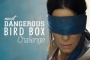 Don't Try This at Home! Most Dangerous 'Bird Box' Challenges