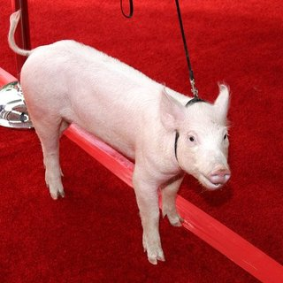 Wilbur in Charlotte's Web Los Angeles Premiere