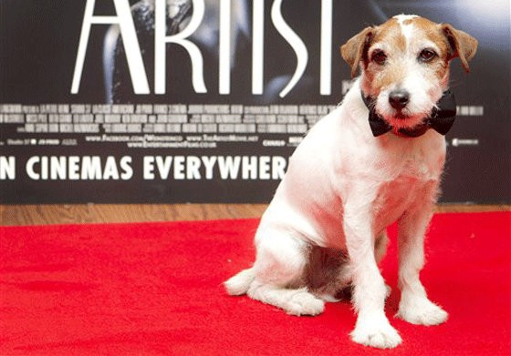 'The Artist' Famous Dog Star Uggie to Retire From Acting at 10
