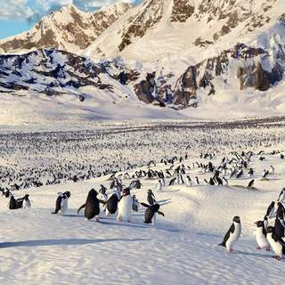 Happy Feet Picture 8