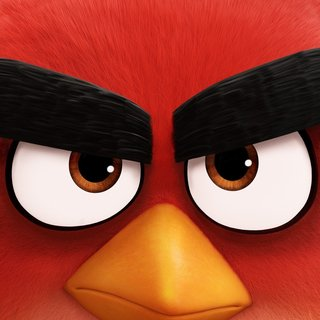 Angry Birds Picture 8