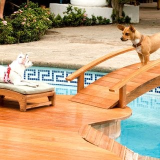 Beverly Hills Chihuahua Picture 3