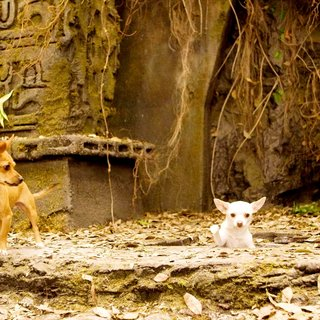 Beverly Hills Chihuahua Picture 13