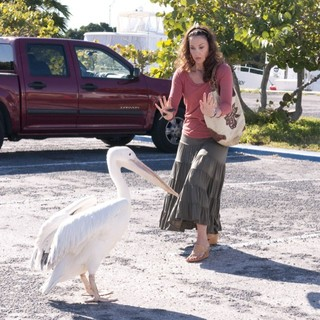 Dolphin Tale Picture 30