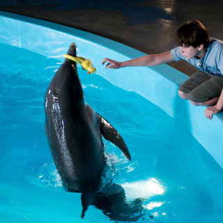 Dolphin Tale Picture 8