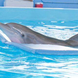 Dolphin Tale Picture 12