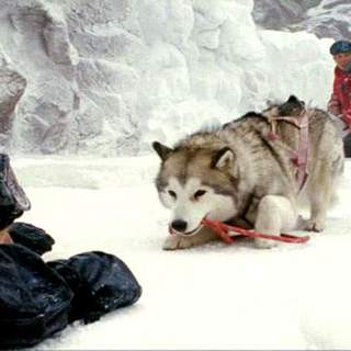 Paul Walker as Jerry Shepard in Walt Disney Pictures' Eight Below (2006)