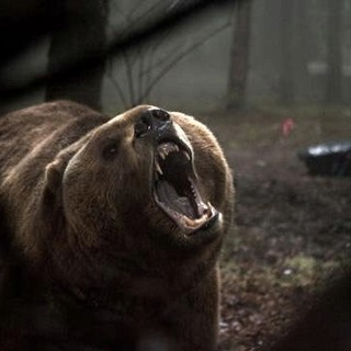 Into the Grizzly Maze - A scene from Vertical Entertainment's Into the Grizzly Maze (2015)