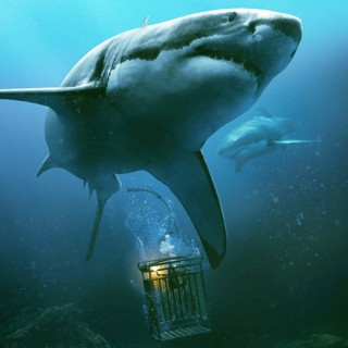 47 Meters Down Picture 3
