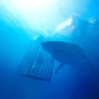 47 Meters Down Picture 6