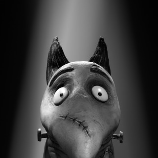 Frankenweenie Picture 16
