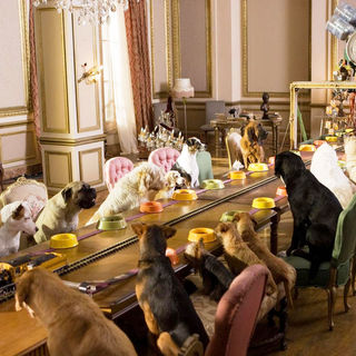 Hotel for Dogs - A scene from DreamWorks' Hotel for Dogs (2009)