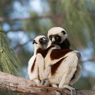 A scene from Warner Bros. Pictures' Island of Lemurs: Madagascar (2014)