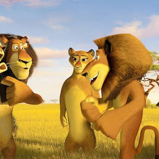 Madagascar: Escape 2 Africa - A scene from DreamWorks Pictures' Madagascar: Escape 2 Africa (2008)