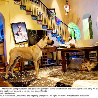 A scene from 20th Century Fox's Marmaduke (2010)