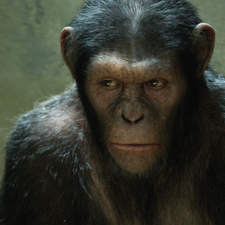 Rise of the Planet of the Apes Picture 2