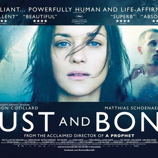 Rust and Bone Picture 35