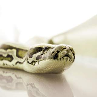 Snakes on a Plane Picture 13