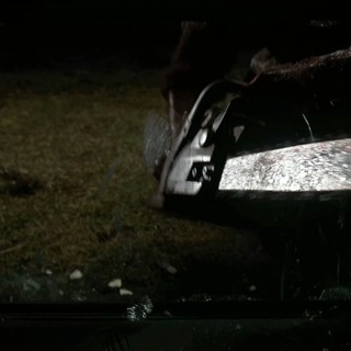 Texas Chainsaw 3D Picture 28