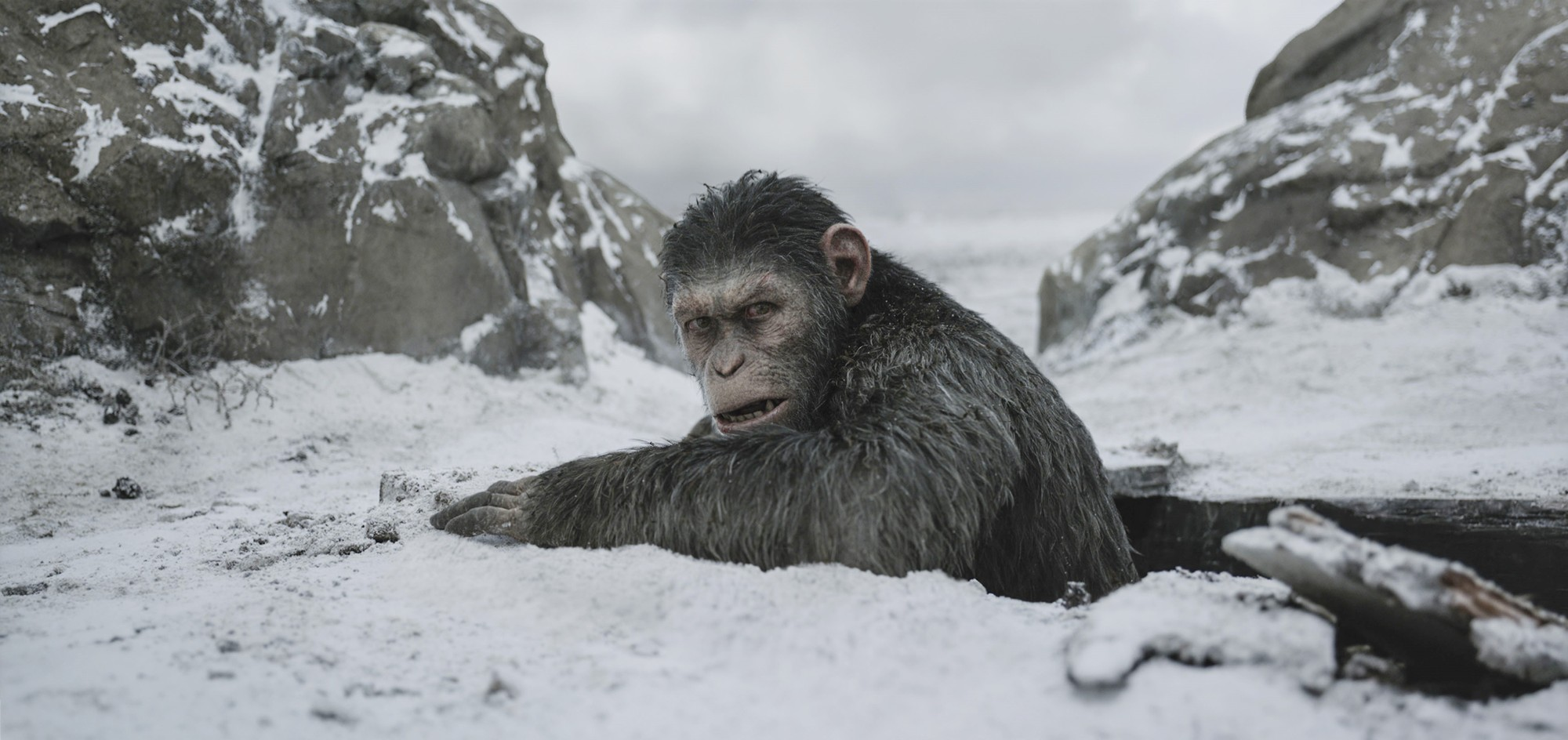 Caesar from 20th Century Fox's War for the Planet of the Apes (2017)