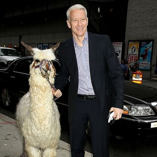 Anderson Cooper in Anderson Cooper at The Late Show with David Letterman with A Lama