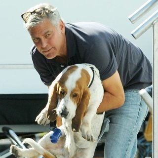 George Clooney and Amal Alamuddin Take Their Hound Dog on The Set of Suburbicon