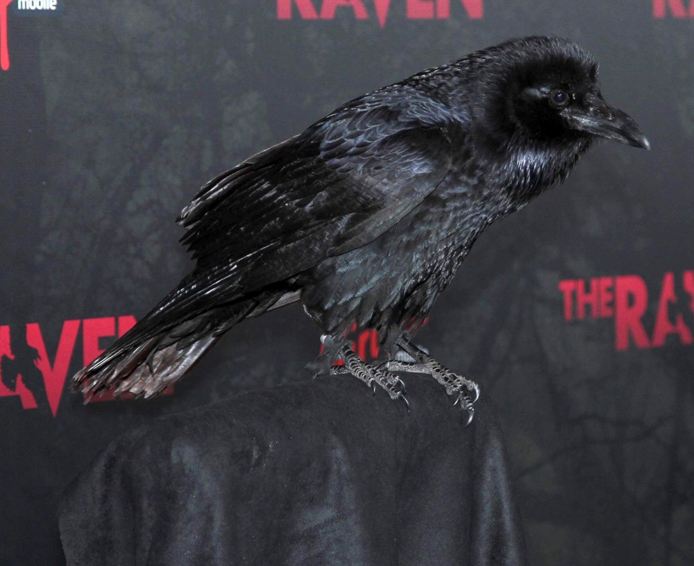 <br>Special Screening of Relativity Media's The Raven - Arrivals